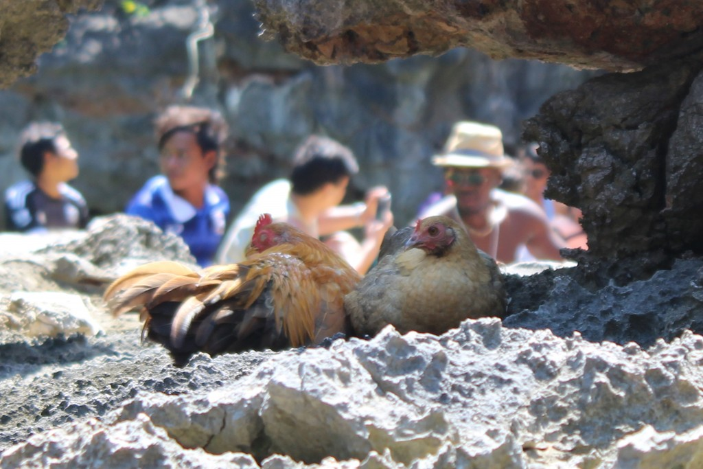 We came across a couple of wild chickens as we explored the archipelago.
