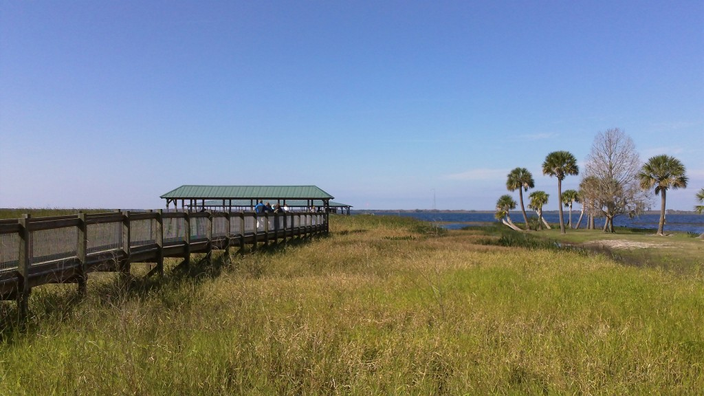 The airboat dock is accessed by a long boardwalk over a field of reeds and rushes.