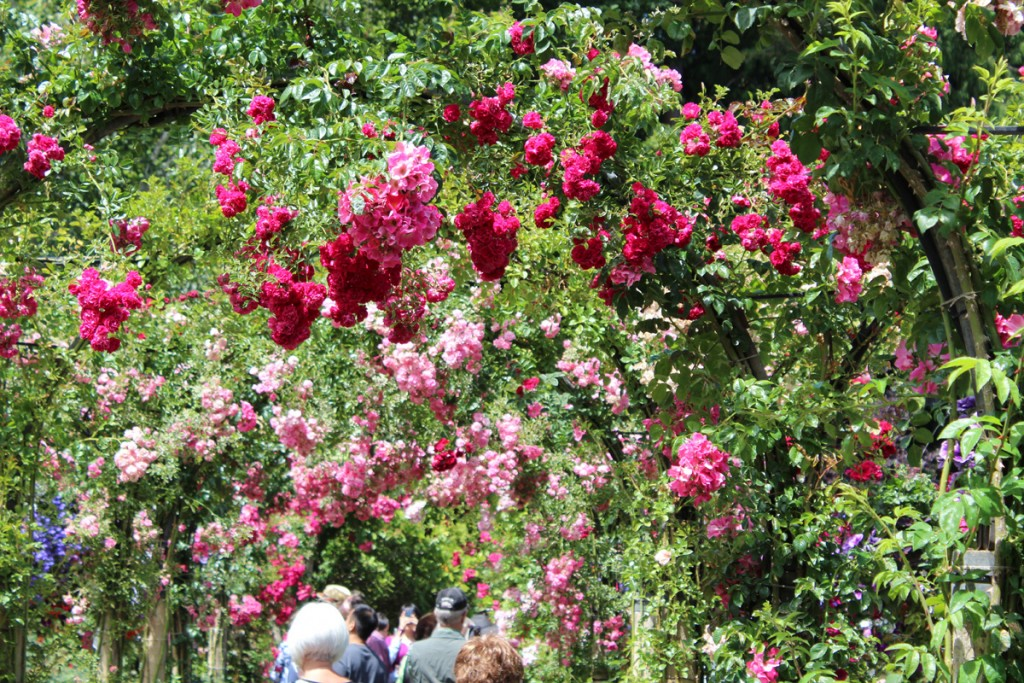 The covered path at the Rose Garden