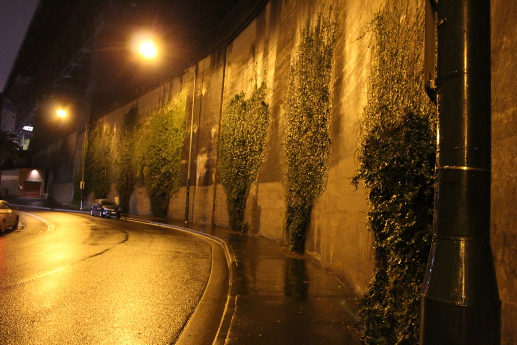 The vine covered wall.