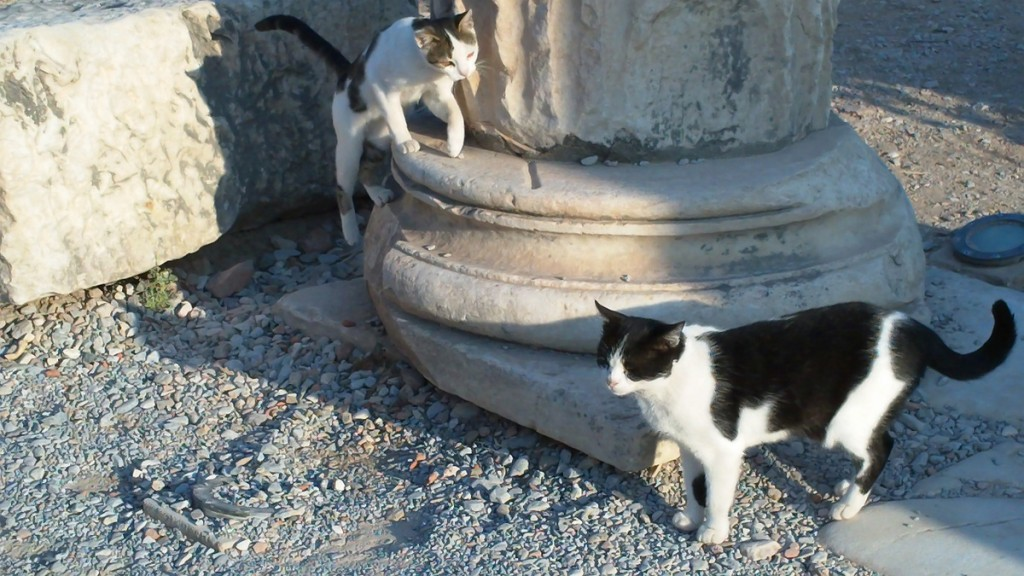 Lots of feral cats at Ephesus - as there were in Cadiz and at Rome's Colliseum